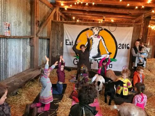 Kids and Goats and Yoga | image via Your Daily Goats facebook