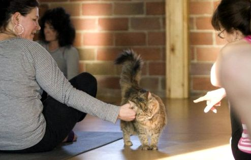 cat-shelter-yoga