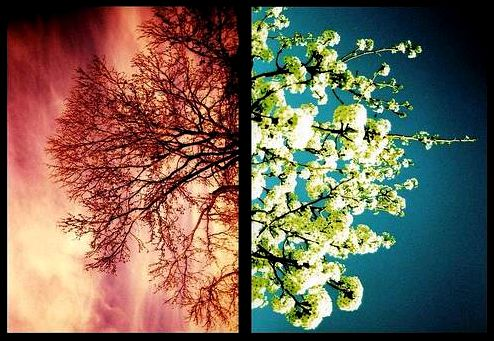 Winter to Spring